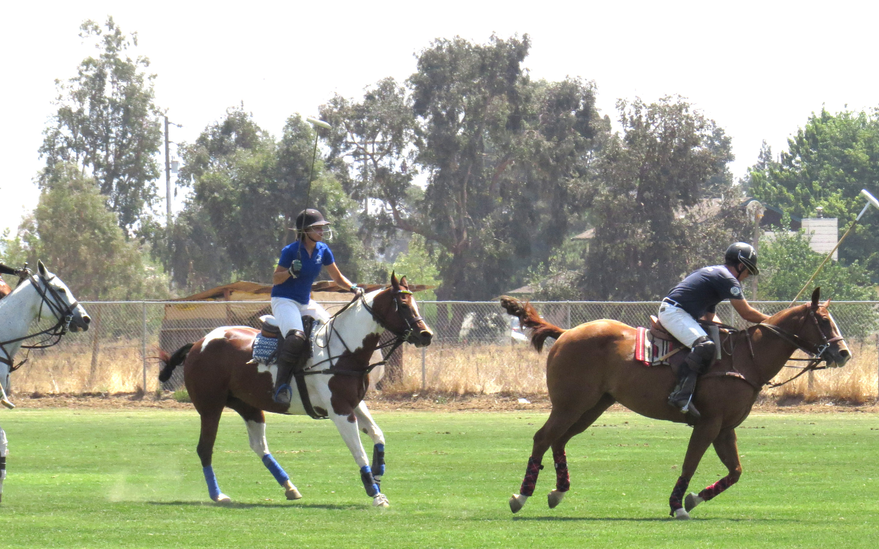 Main story – South Bay Polo Club players share passion for 'Sport of Kings'